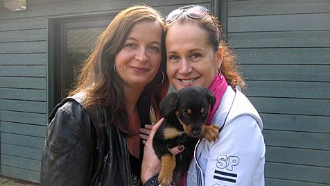 In Wien entsteht ein neues Vorzeige-Tierheim (Bild: Zwefo)