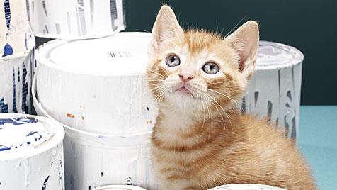 Was Katzenbesitzer beim Renovieren beachten sollten (Bild: thinkstockphotos.de)
