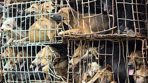 Thailändische Marine rettet 750 Hunde vor Kochtopf (Bild: DAPD/AP)