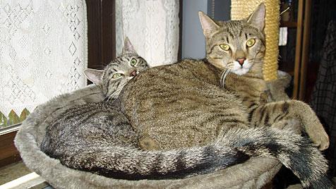 Pool des Nachbarn wurde für Katzen in NÖ zur Todesfalle (Bild: Nicole Janda)