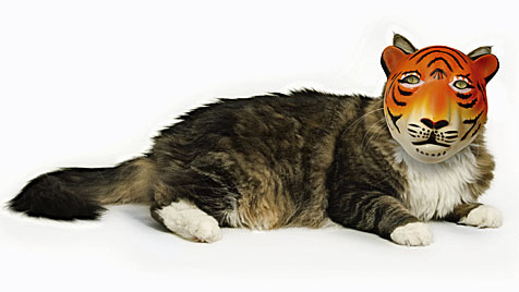 Perücken für Katzen sind in den USA der letzte Schrei (Bild: thinkstockphotos.de)