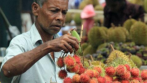 Sri Lanka und die Malediven: Aug in Aug mit dem Walhai (Bild: EPA)