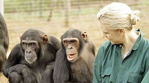 """Schimpansen so nahe zu sehen, ist fantastisch"" (Bild: Stuart Jolley, Fair Soul)"
