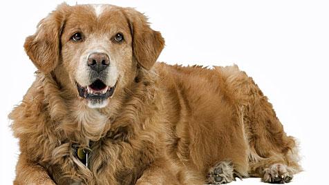 Für Erziehung ist es auch beim Hund nie zu spät (Bild: Photos.com/Getty Images)