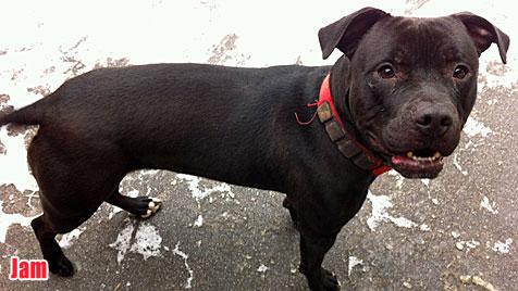 Hunde suchen ein neues Zuhause (Bild: Tierheim St. Pölten)