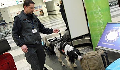 """Polizeihund """"Boyke"""" spürte Drogen und Geld am Airport auf (Bild: Peter Tomschi)"""