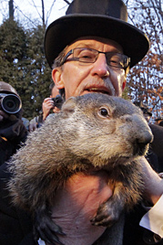 """USA: Murmeltier """"Phil"""" prophezeit weiter Winterwetter (Bild: AP)"""