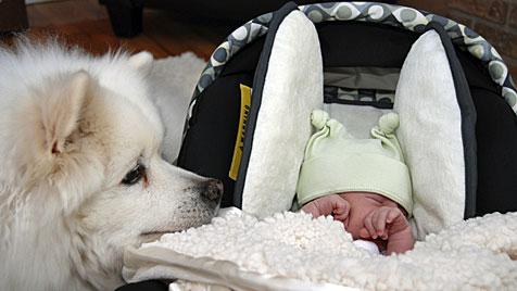 Wie man seinen Hund auf das Baby vorbereitet (Bild: thinkstockphotos.de)
