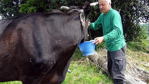Ein Mann versorgt die Tiere in Japans verseuchter Zone (Bild: Naoto Matsumura)