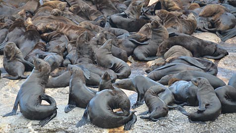 In Südafrika findet man die ganze Welt in einem Land (Bild: Eva Lehner)