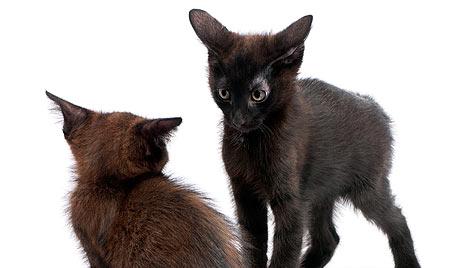 Aggressive Katzen nach dem Tierarzt - was tun? (Bild: thinkstockphotos.de)
