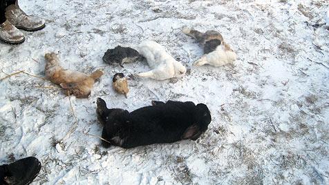 Zahlreiche Tiere erfrieren hilflos auf Grundstück in NÖ (Bild: Tierheim Dechanthof)