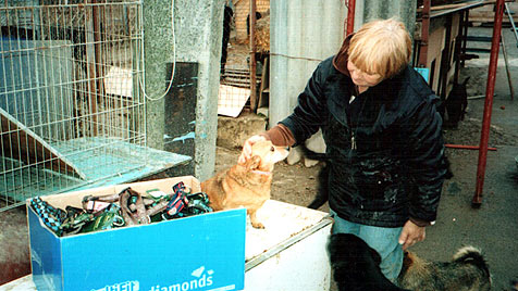 Erfolge im Kampf gegen Hundeleid in der Ukraine (Bild: Tamara Tarnawska)