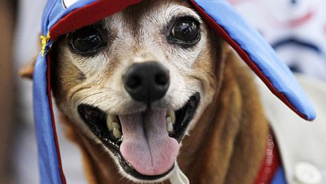 Hunde feiern an der Copacabana ihren eigenen Karneval (Bild: dapd/AP/Silvia Izquierdo)
