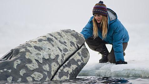 """Drew Barrymore h�rt auf den """"Ruf der Wale"""" (Bild: UPI)"""