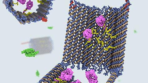 Nanoroboter aus DNA greift gezielt Krebszellen an (Bild: Wyss Institute/Harvard University)