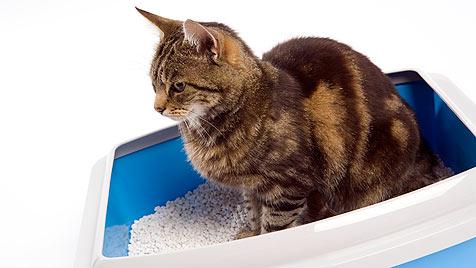 Frau kauft heikler Katze aus Not 360 Kilo Katzenstreu (Bild: thinkstockphotos.de)