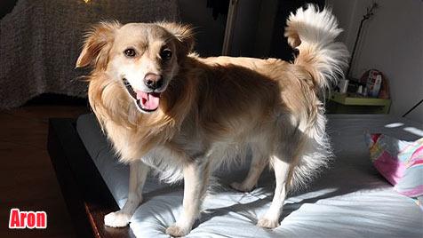 Hunde suchen ein neues Zuhause (Bild: Jägersberger)