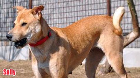 Hunde suchen ein neues Zuhause (Bild: Tierpension Schandl)