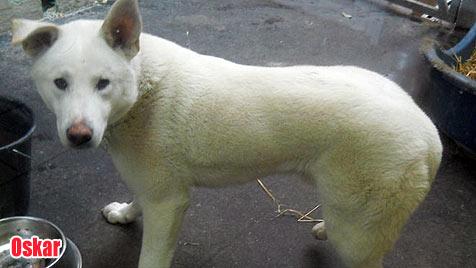 Hunde suchen ein neues Zuhause (Bild: Tierheim Arche Noah)