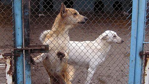 """Kiewer Tierschützer an Politik: """"Haltet eure Versprechen!"""" (Bild: dez)"""