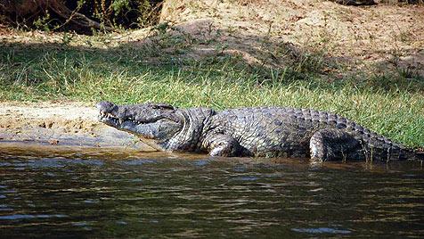 """""""Ich könnte stundenlang den Nil herunter schippern"""" (Bild: Stuart Jolley, fair soul)"""