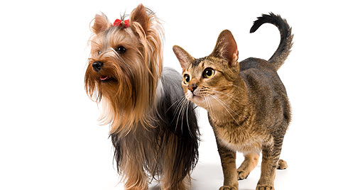 Medikamentengabe nur nach Absprache mit einem Tierarzt (Bild: thinkstockphotos.de)