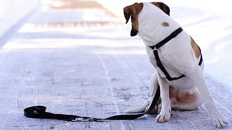 Das ist zu tun, wenn du ein herrenloses Haustier findest (Bild: thinkstockphotos.de)