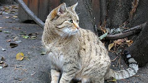 Katze verursacht Küchenbrand in Kärnten (Bild: thinkstockphotos.de)