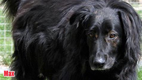 Hunde suchen ein neues Zuhause (Bild: Tierheim Klagenfurt)