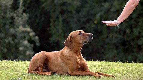 Ab 1. April gibt es ein Qualitätssiegel für Hundetrainer (Bild: thinkstockphotos.de)