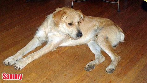 Hunde suchen ein neues Zuhause (Bild: Hundeseelen-Nothilfe e. V.)