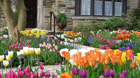 Die schönsten Frühlingsboten für dein Zuhause (Bild: thinkstockphotos.de)