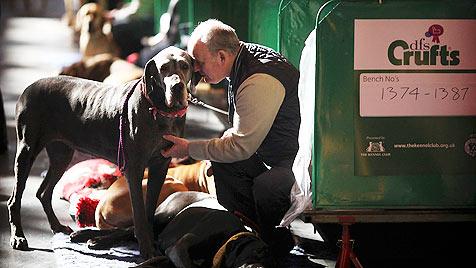 """Kein """"Crufts""""-Pokal für krank gezüchtete Hunde (Bild: ddp images/AP-Photo/Simon Dawson)"""