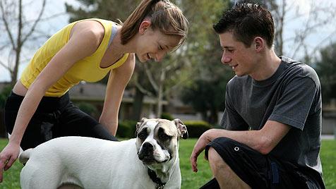 Hündin kehrt nach Adoption freiwillig in US-Tierheim zurück (Bild: Photos.com/Getty Images)