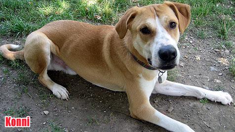 Hunde suchen ein neues Zuhause (Bild: Tierschutzverein Vösendorf)