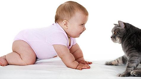 Tipps zur Katzenhaltung für Schwangere (Bild: thinkstockphotos.de)
