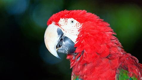 So fühlen sich Papageien im neuen Zuhause wohl (Bild: photos.com/Getty Images)