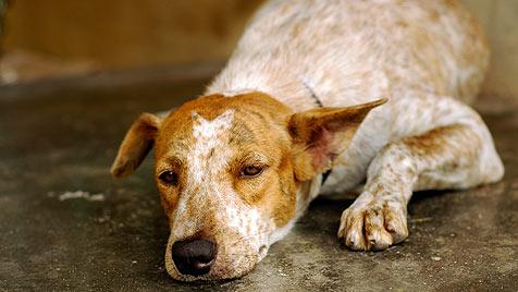Tierquäler kommen trotz handfester Beweise davon (Bild: thinkstockphotos.de)