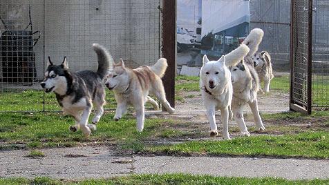 Beschlagnahmte Tiere überfüllen Dechanthof in NÖ (Bild: Tierheim Dechanthof)