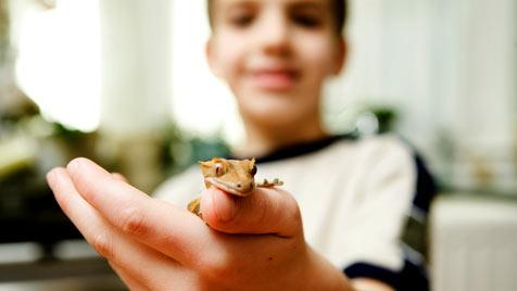 """Ende Mai lockt die """"Kinder Tier Woche"""" auf der VetMed (Bild: thinkstockphotos.de)"""