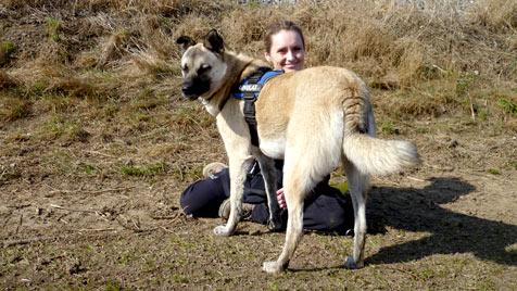 Als Spaziergänger für Tierheimhunde Gutes tun (Bild: Tierheim Dechanthof)