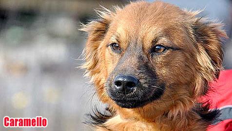 Hunde suchen ein neues Zuhause (Bild: Tier)