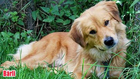 Hunde suchen ein neues Zuhause (Bild: Tierheim Linz)