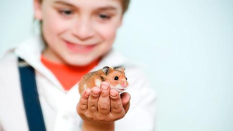Nager sind von Natur aus reinliche Tiere (Bild: thinkstockphotos.de)