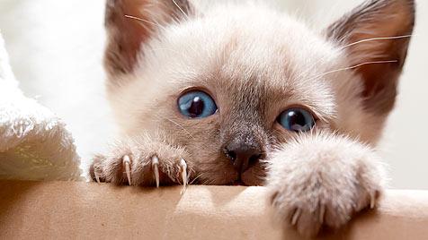 Wie du deine Katze artgerecht und lecker ernährst (Bild: thinkstockphotos.de)