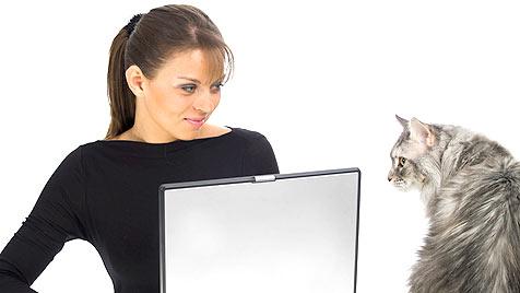 Singles sind glücklicher mit Schmusekatzen (Bild: thinkstockphotos.de)
