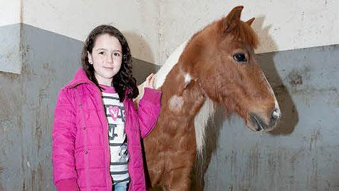 """Unbekannter quält Pony """"Voltin"""" aus Oberösterreich (Bild: Werner Kerschbaummayr)"""