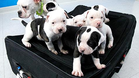 Amerikaner setzte sechs Welpen in Koffer aus (Bild: dapd/Dave Zapotosky)