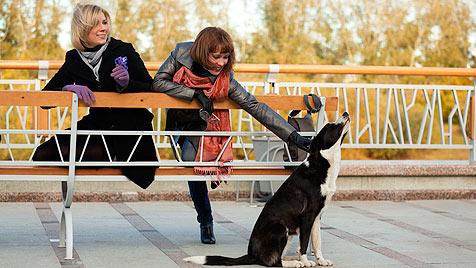 Wiener Hundehalter werden verstärkt kontrolliert (Bild: thinkstockphotos.de)
